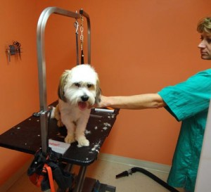 Grooming a dog at Cavalier Kennels